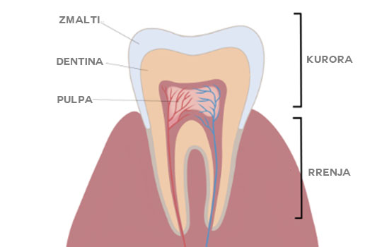 anatomi dhembi